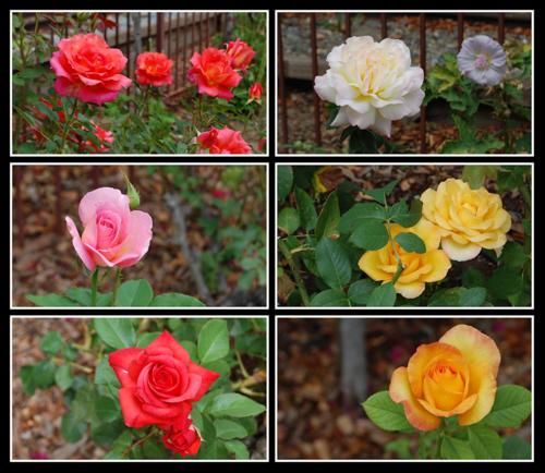 Gilroy Gardens flowers Aug 2009 blog