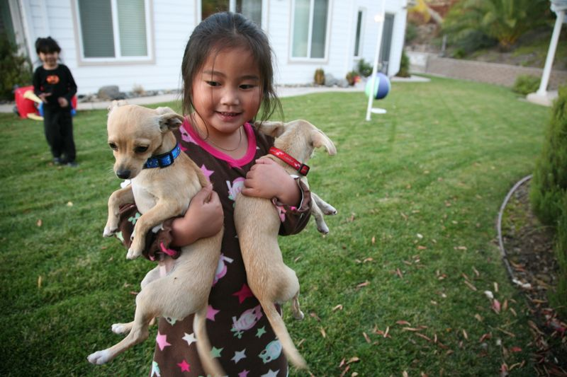 Puppies 030