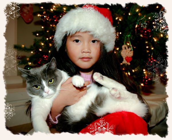 20091205-kitty gwenny santa hat snowflake blog background