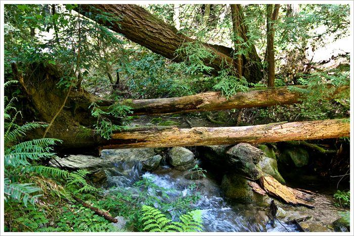 Blog 20100418fall creek trail4085