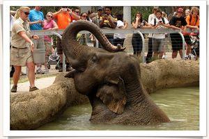 San diego zoo-1439
