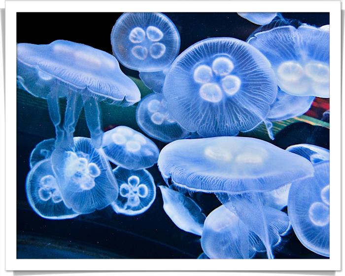 San francisco-1644 jellyfish fix