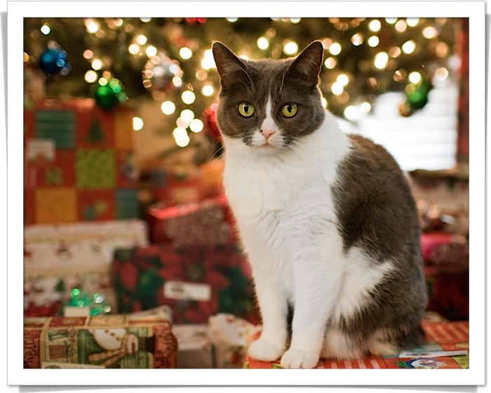 4 kitty under christmas tree