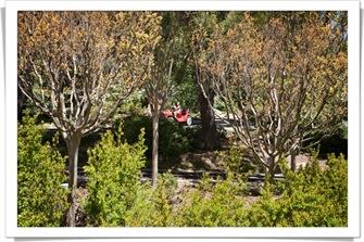 blog gilroy_gardens_IMG_6825