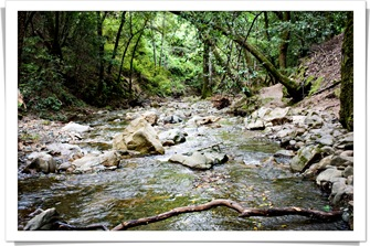 blog camping_uvas_canyon_creek_IMG_7392