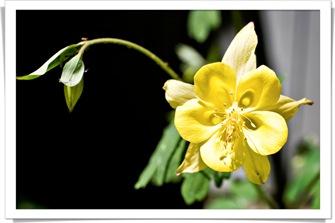 blog gilroy_gardens_IMG_6960