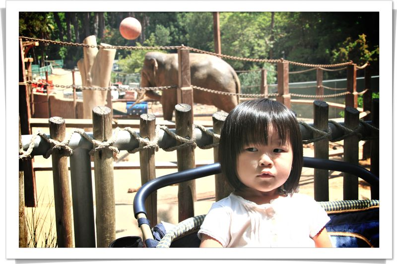 Blog 20070824 i Elephant behind me