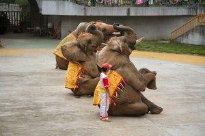 20060824_elephants_1