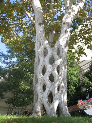 Basket tree at Bonfante Gardens