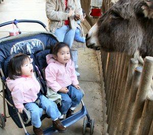 Donkey_awe
