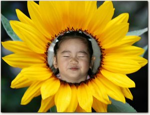 Sunflower_sm