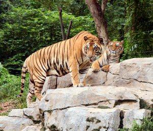 Zzz20060906_safari_park_058