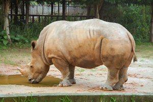 Zzz20060906_safari_park_074