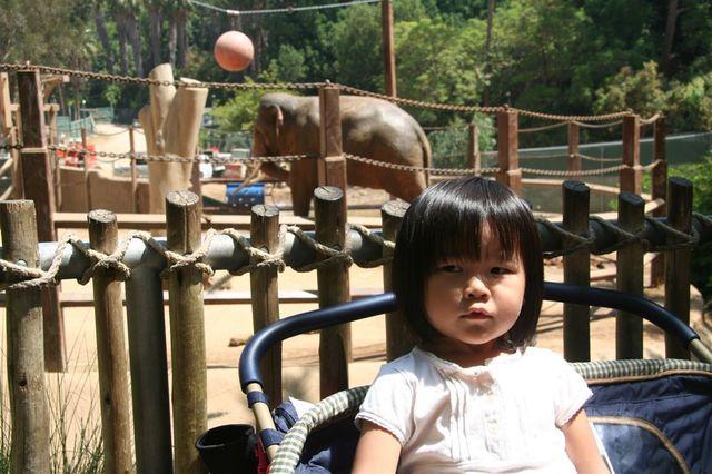 20070824 i elephant behind me