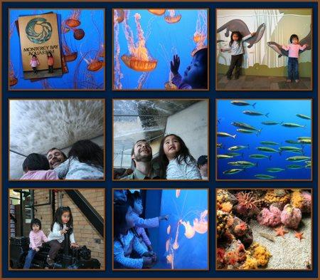 Monterey_bay_aquarium_9_sm